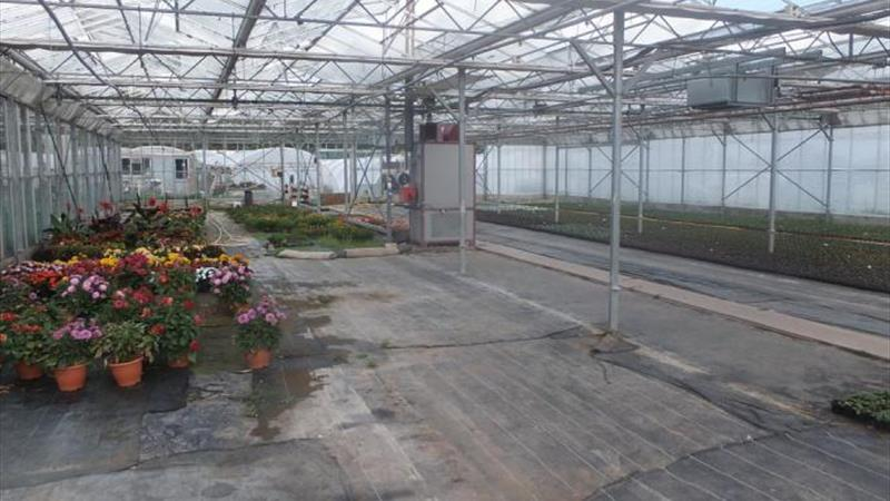 Business Opportunity - Ornamental Nursery